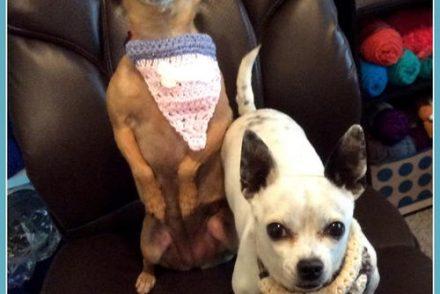 Cotton Dog Bandanna Free Crochet Pattern