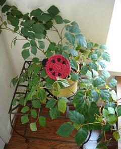 Ladybug Coaster Free Crochet Pattern
